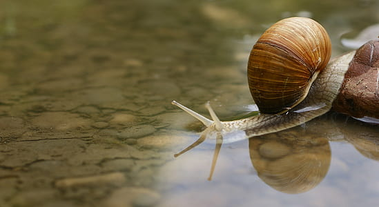 brown and gray snail