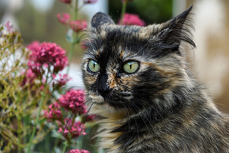 calico cat and purple flowers