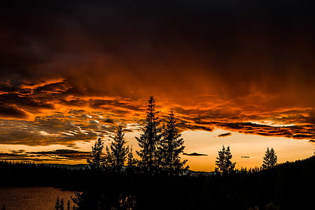 silhouette of trees under orange clouds and skies