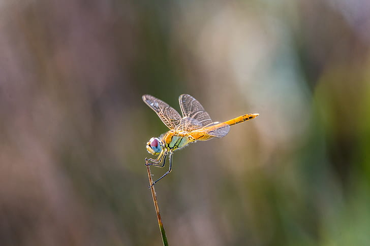 orange and green dragonfly on brown stem