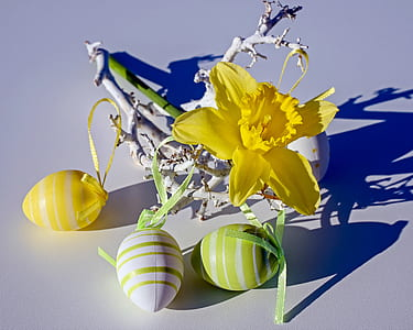 yellow daffodil flowers with three assorted-color plastic eggs
