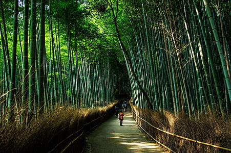 people walking road with surrounded with bamboo trees during daytrime