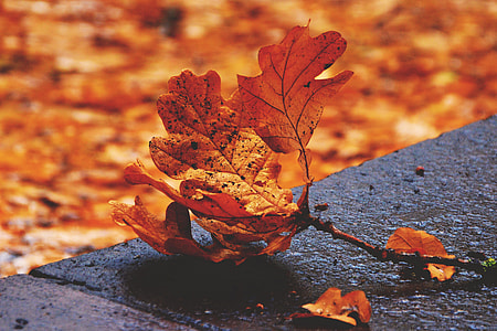 Wide-angle shot of fallenautumn leaves