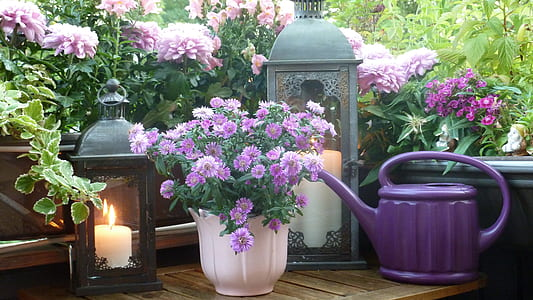 purple flowers beside candle lanterns and watering can