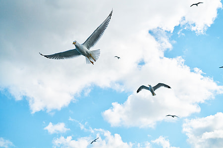 low angle photography of several gulls flying
