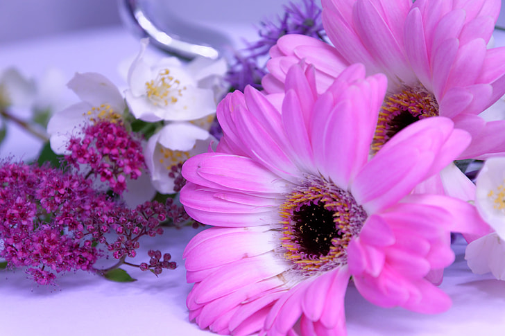 close photo of two pink aster flowers