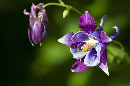 purple orchid flower in bloom
