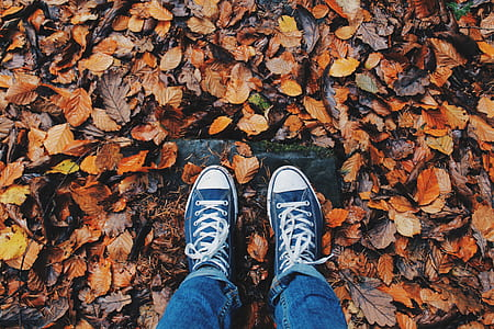 person wearing pair of blue low-top sneakers and blue jean stepping on ground covered with withered leaves