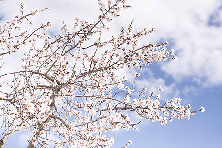 white petaled leaf tree under white and blue cloudy sky