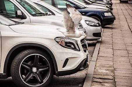 White and Black Bird Beside Car Headlight