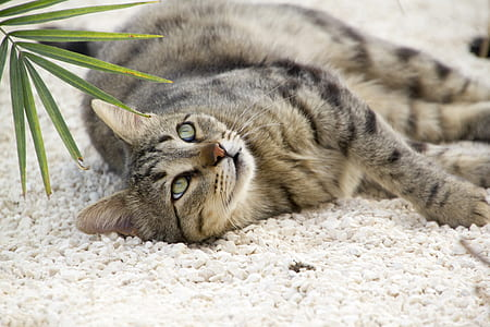 shallow focus photography of gray and black Tabby cat
