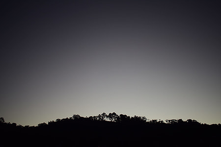 silhouette of forest during night time