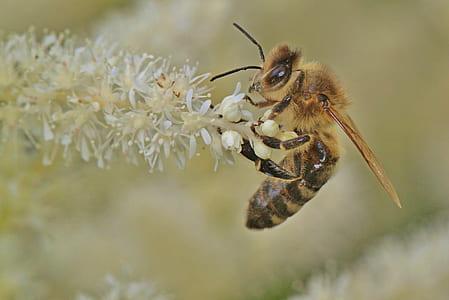 macro photography yellow and black honey bee on white petal flower