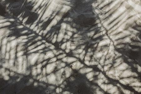 Palm leaf and shadow