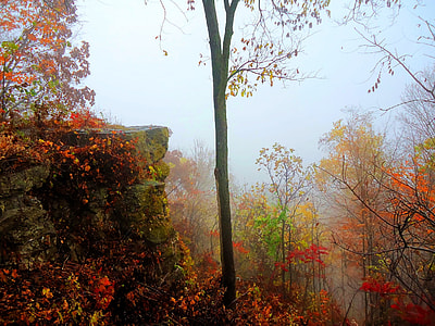 orange and green leafed trees