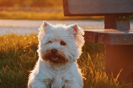 photo of medium-coated white puppy near bench