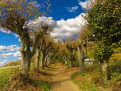 pathway between green trees under blue cloudy sky