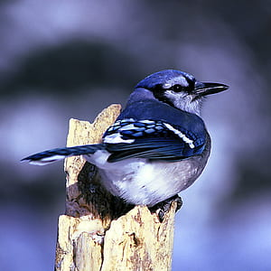 blue and white bird perching on wood