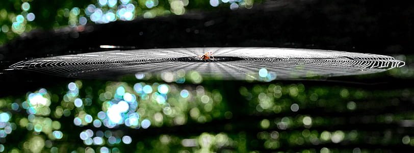 focus photo of spider with web