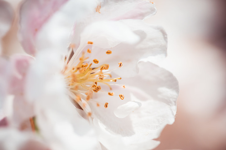 Wonderful Spring Bloom Close Up