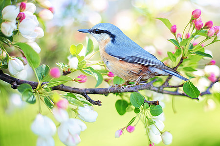 gray and brown bird on flower tree branch