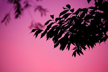 silhouette of black leaves