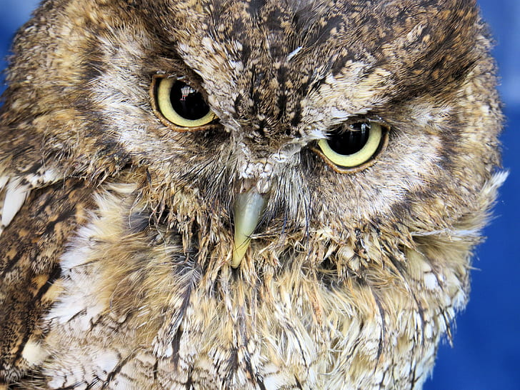 Closeup Photo Of Owl