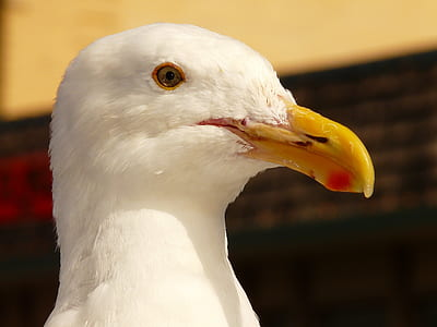 yellow beak white bird photo