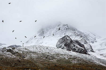 time lapse photography of flock of bird flying above mountain