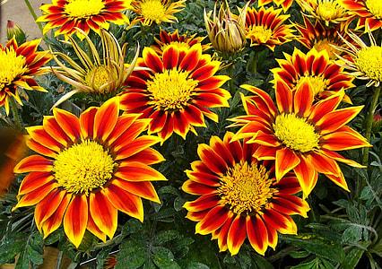 closeup photo of orange-and-white petaled flowers
