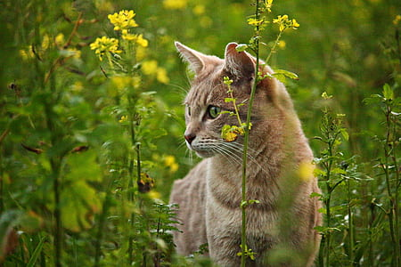 short-coated brown cat besides yellow flowers