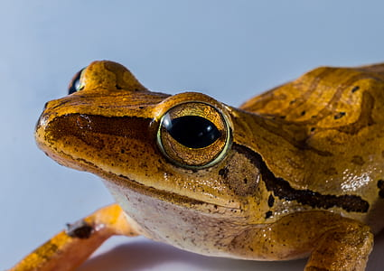 green frog closeup view