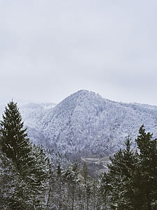 snow covered pine trees on mountain taken under white clouds during daytime