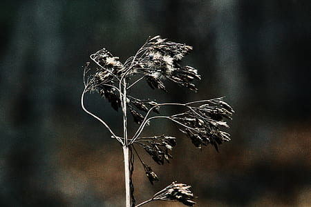 close-up photography withered plant