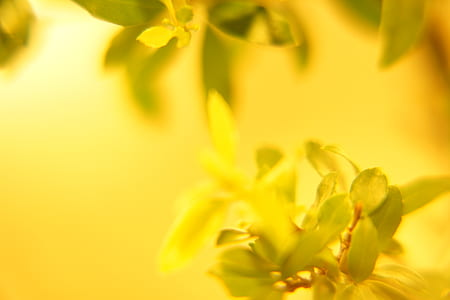 close up photography yellow petaled flower