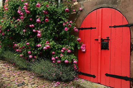 red wooden door near pink petaled flowers