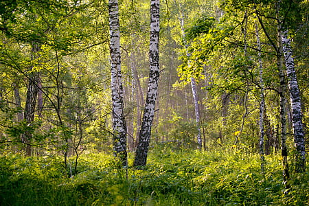 landscape of rain forest during daytime