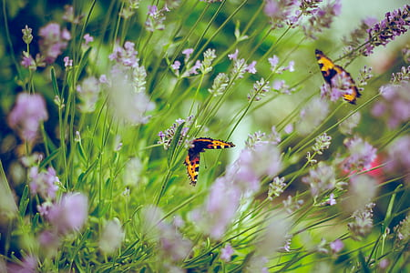 photo of two butterflies on flowers