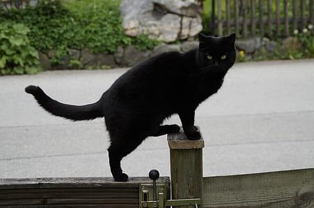 short-coated black cat on gate