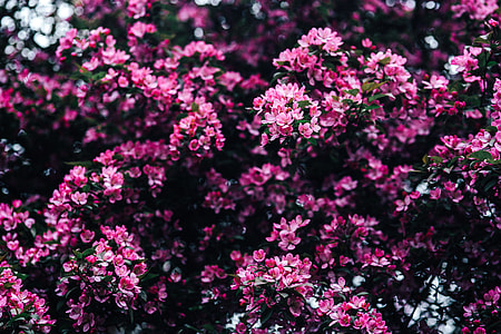 Lovely pink flowers blooming from the tree branches