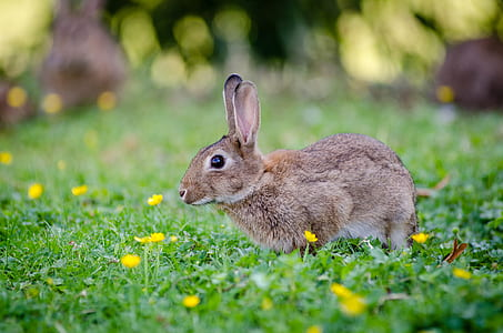 Close Up Photography of Brown Rabbit