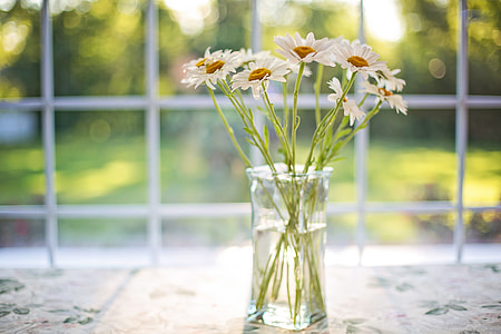 white daisies in glass vase