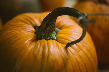 close-up photo of pumpkin