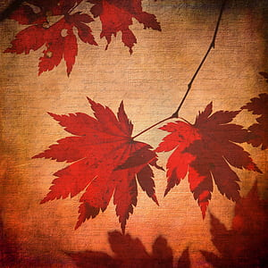 close-up photo of red and beige maple leaf cloth