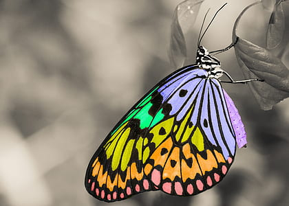 selective focus of multicolored butterfly leaf