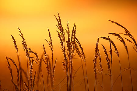 close up photo of wheat field