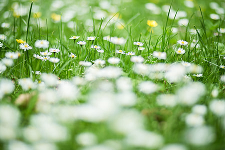 Grass and Daisies at the Park