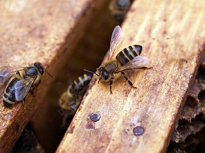Macro Shot Photography of Black-and-yellow Bees