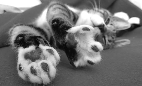 grayscale photo of tabby cat laying on textile