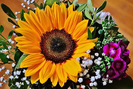 sunflower in macro photo